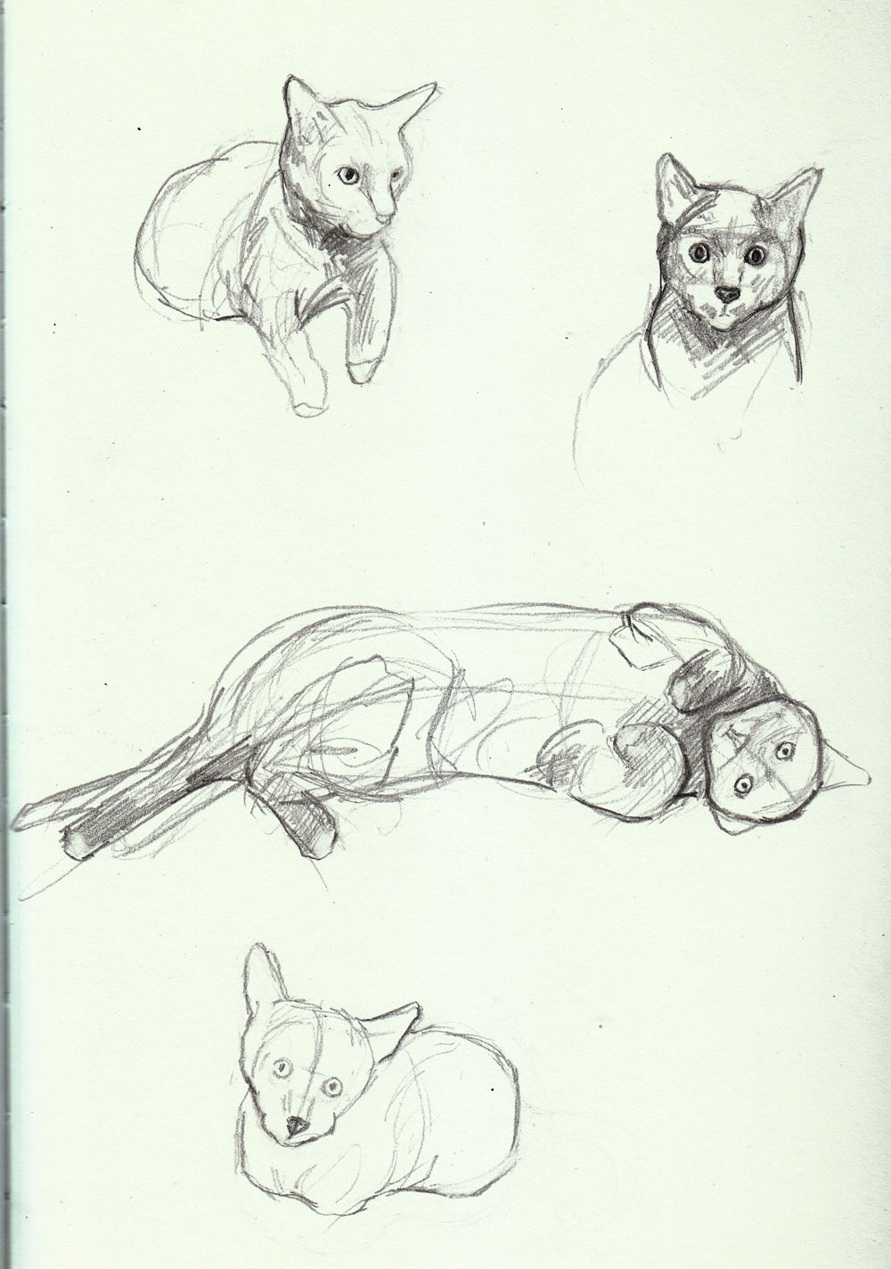 Nori Kun sketches getting to know the cat