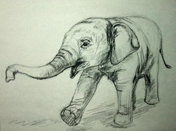 Baby Elephant sketch