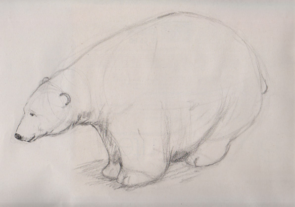 Polar bear sketch from plaster cast