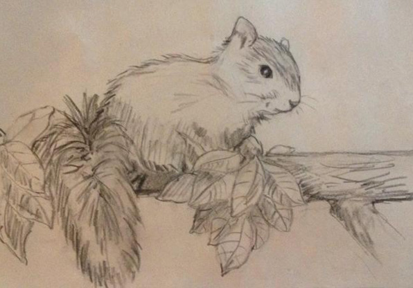 squirrel drawing for Pyar at 596