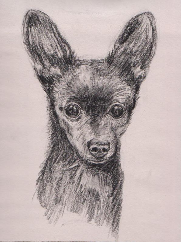 Chenelle sketch